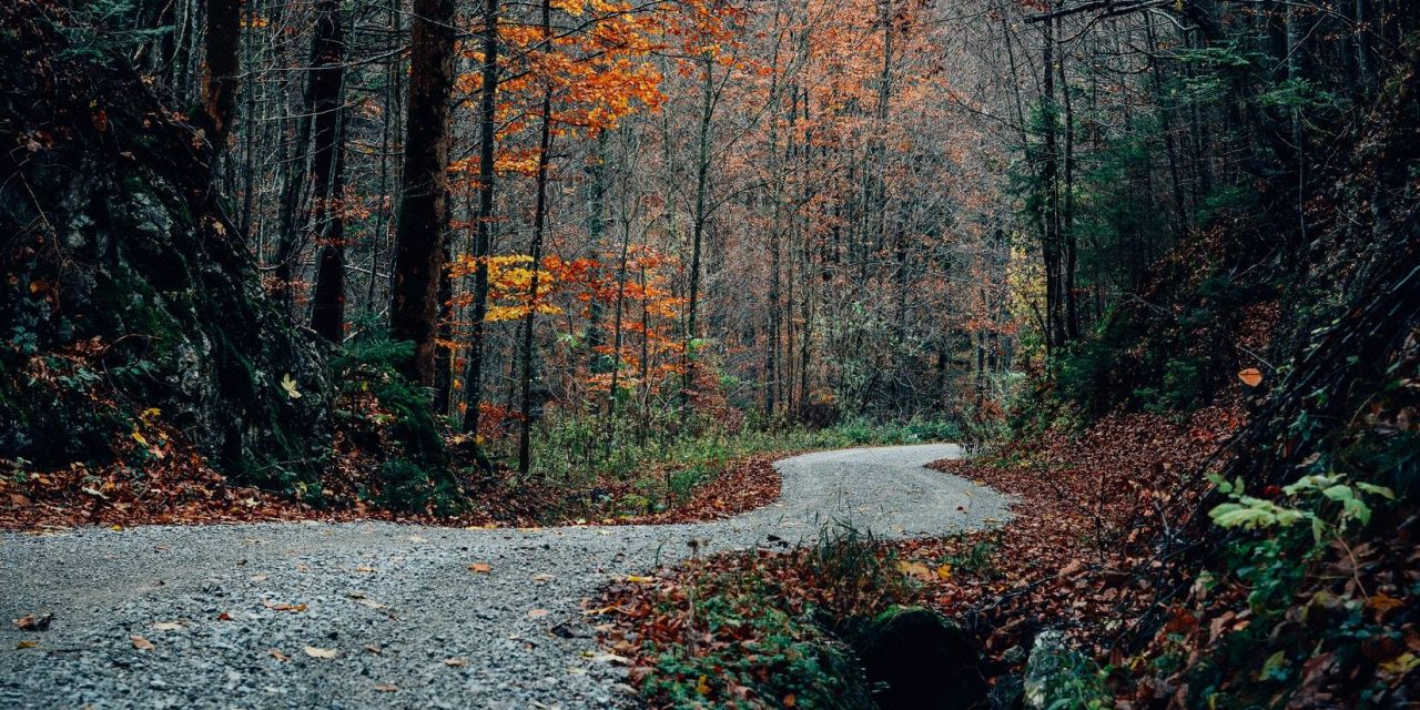 Informare de presă: Înființarea și modernizarea infrastructurii rutiere forestiere și agricole în comuna Prundu Bîrgăului